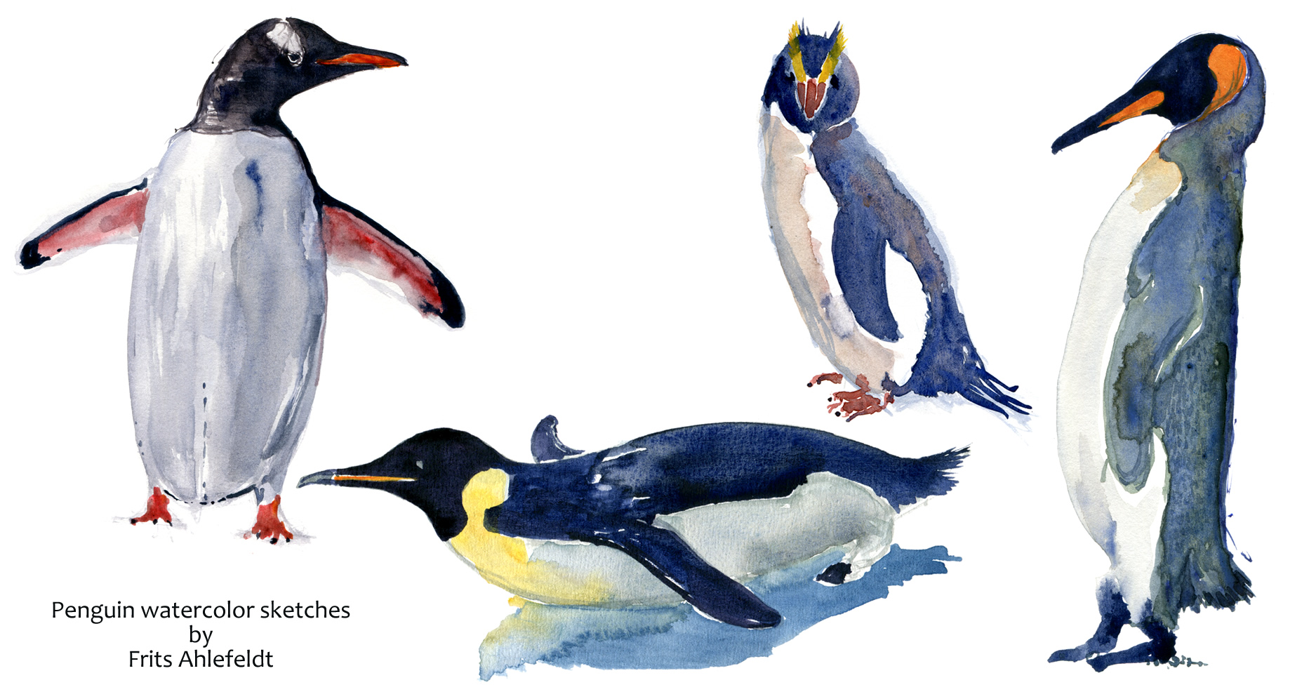 Watercolor sketches of penguins