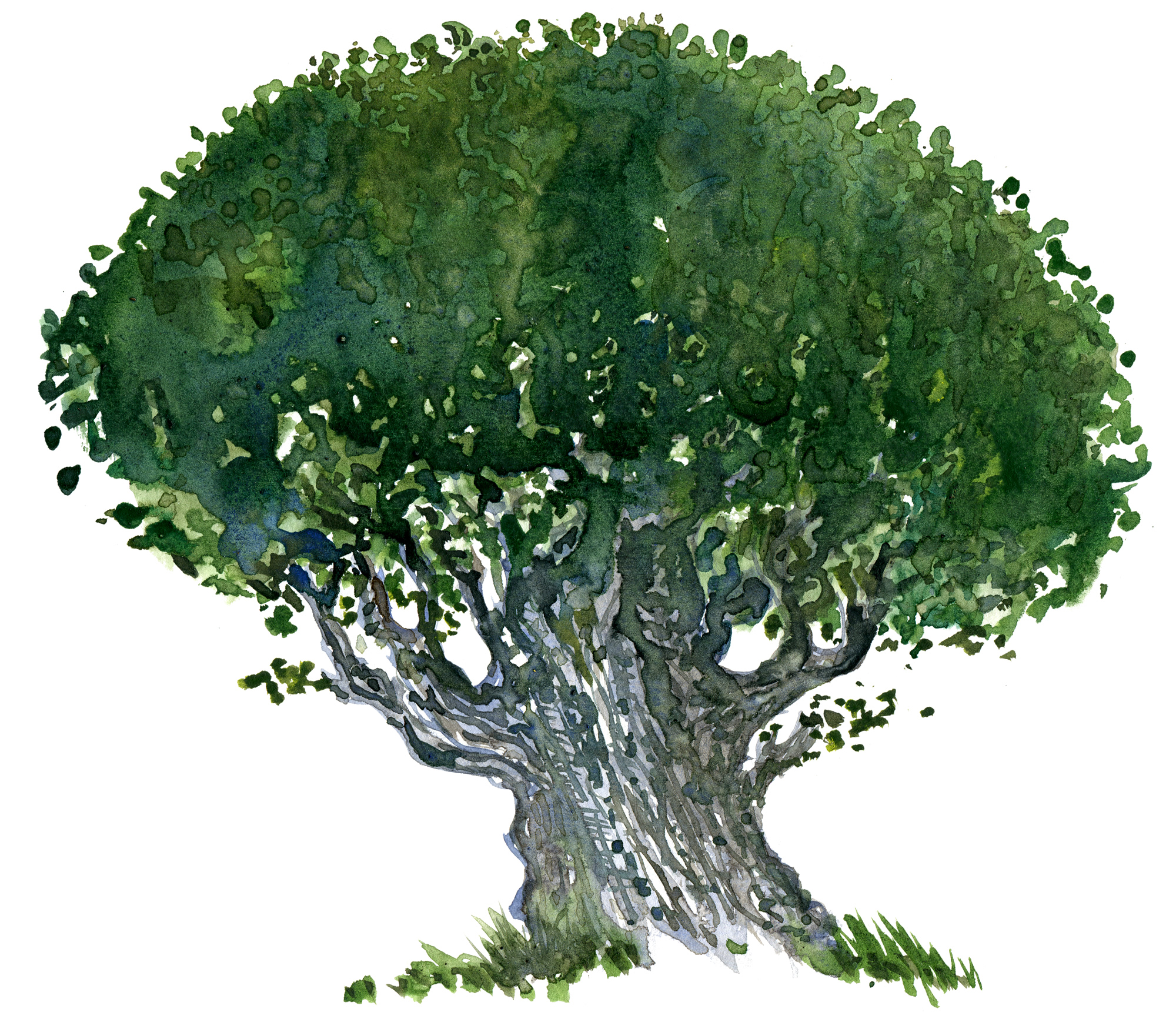 watercolor-tree-sketch | The Hiking Artist project by Frits Ahlefeldt for Tree Drawing With Watercolor  34eri