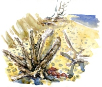 More Driftwood sketches, like the strange life of Driftwood