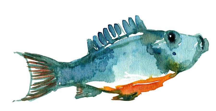 Watercolor fish study of Winslow Homer watercolor