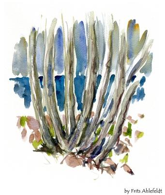 Trees, Bornholm, Denmark. Watercolor