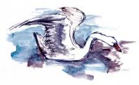 sketch-swan1