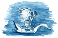 sketch-swan2