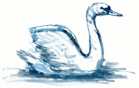 sketch-swan3
