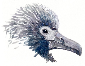 baby albatross watercolor
