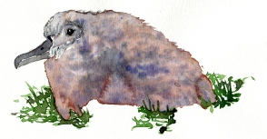 baby albatross watercolor