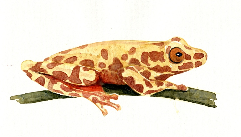 Tropical forest Frog Watercolor