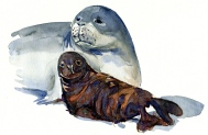 image of Monk seal with baby