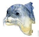 image monk seal head, watercolor