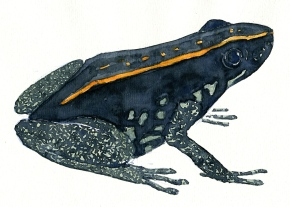 watercolor-poison-dart-frog