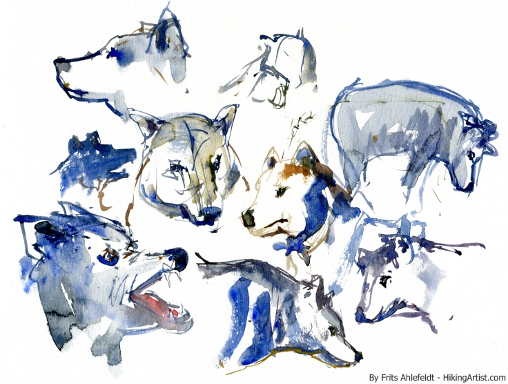 Watercolor of wolfs, fast sketches