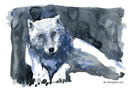 watercolor-wolf-3-white-lying-clean