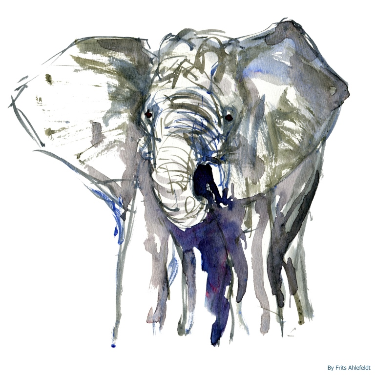 Elephant front, watercolor