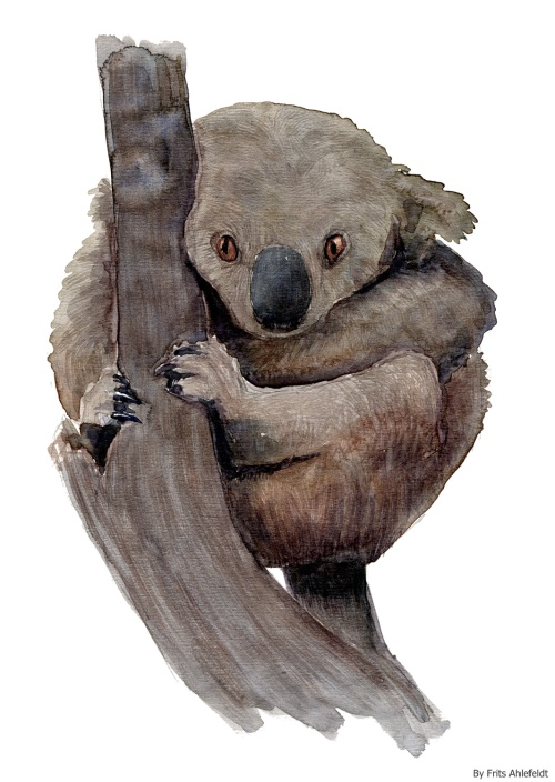 Watercolor of an Koala bear