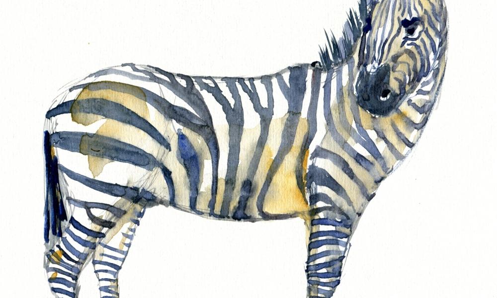 Watercolor of an zebra
