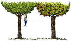 drawing about climbing the wrong tree