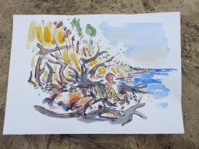 Sketch of fallen trees out to sea