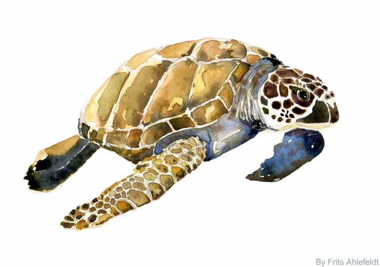 Watercolor of Sea Turtle