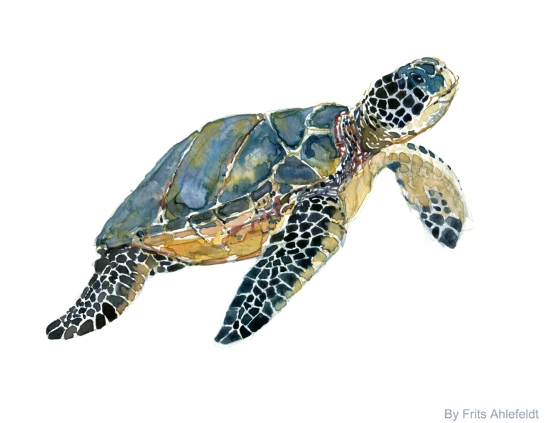 Watercolor of a Sea turtle