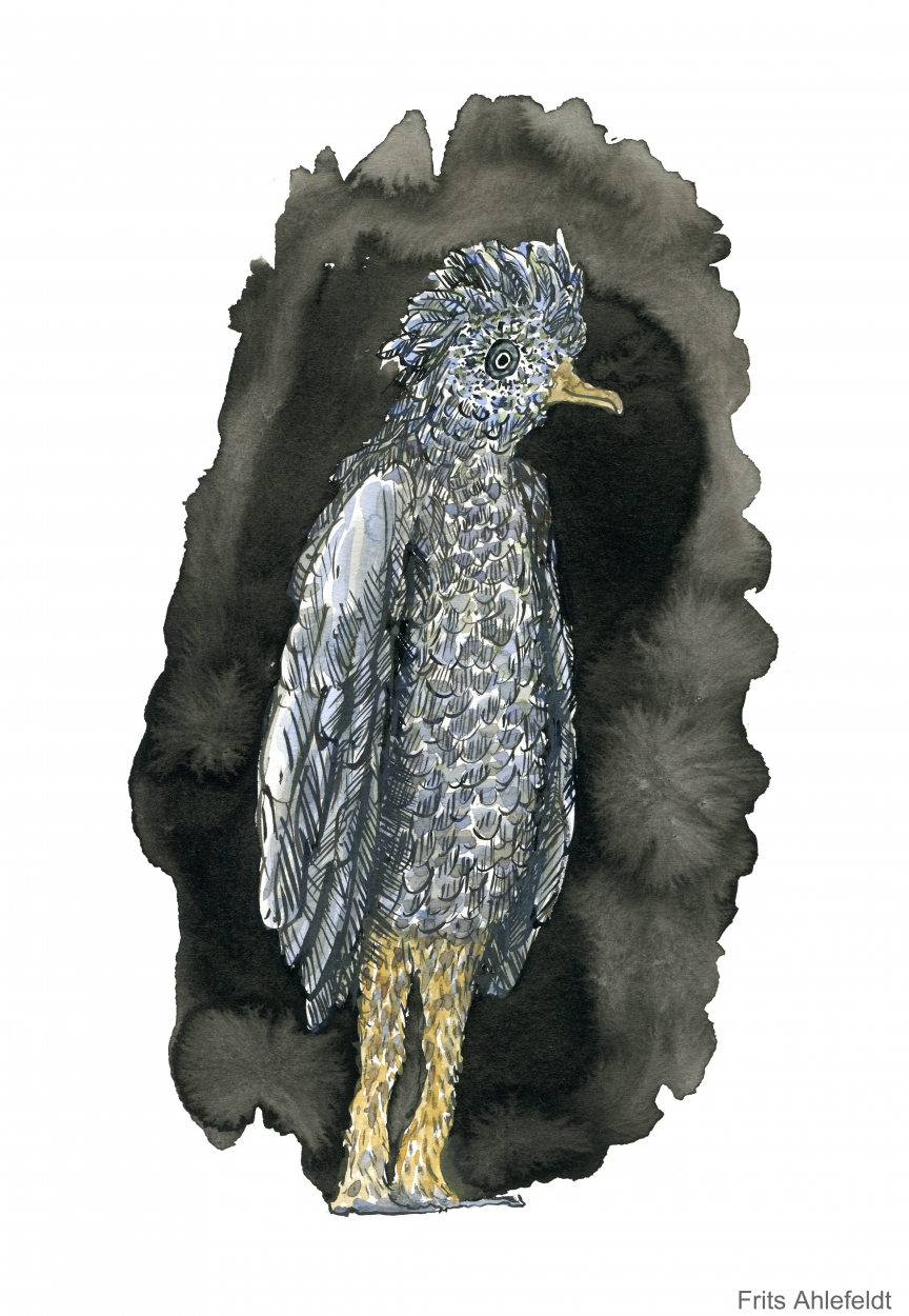 Sketch of a bird with human legs, looking blue