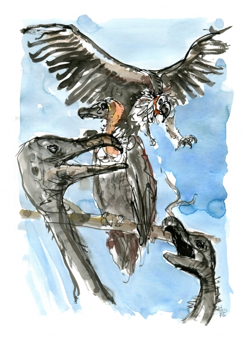 Sketch ink and watercolor of vultures