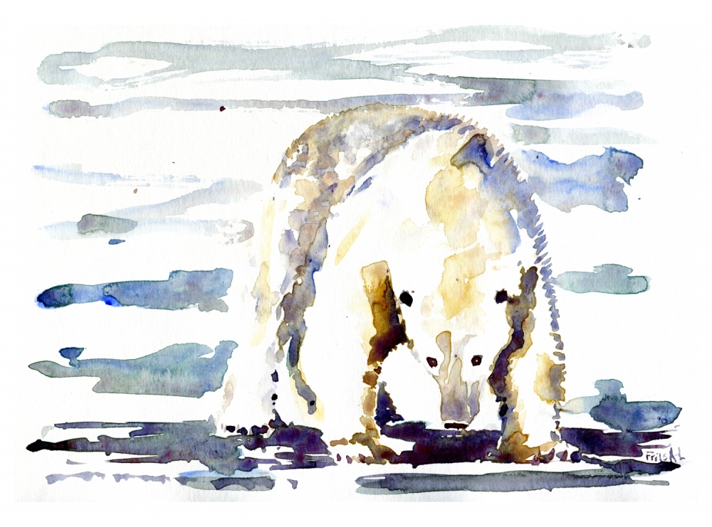 ice bear watercolor painting by frits ahlefeldt