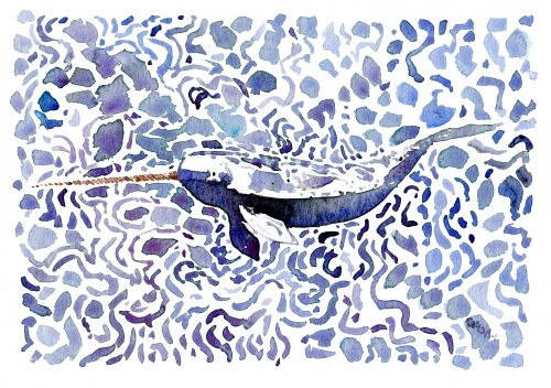 Watercolor study of Narwhal