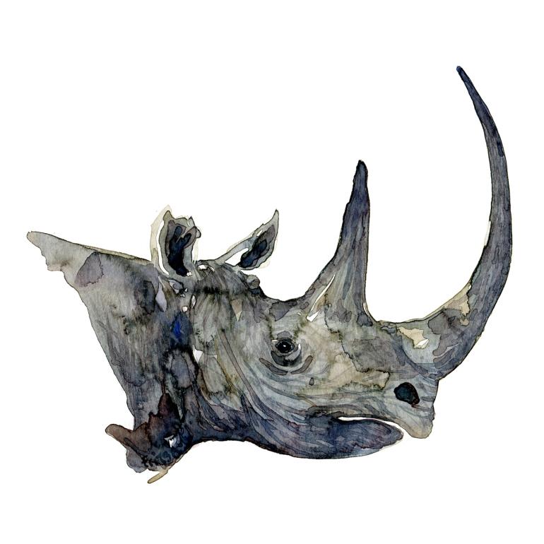 Watercolor drawing of a rhino head