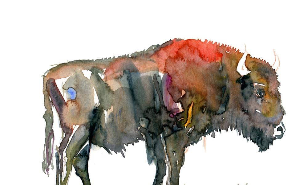 Buffalo watercolor by Frits Ahlefeldt
