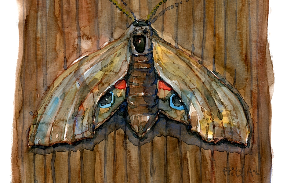 Butterfly watercolor by Frits Ahlefeldt