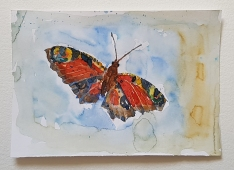 butterfly looking american