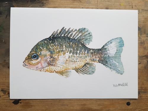 Fish Watercolor artprint by Frits Ahlefeldt