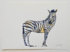 zebra sideview