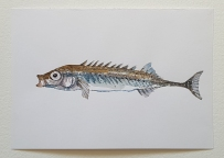 Fish watercolor Pickle back