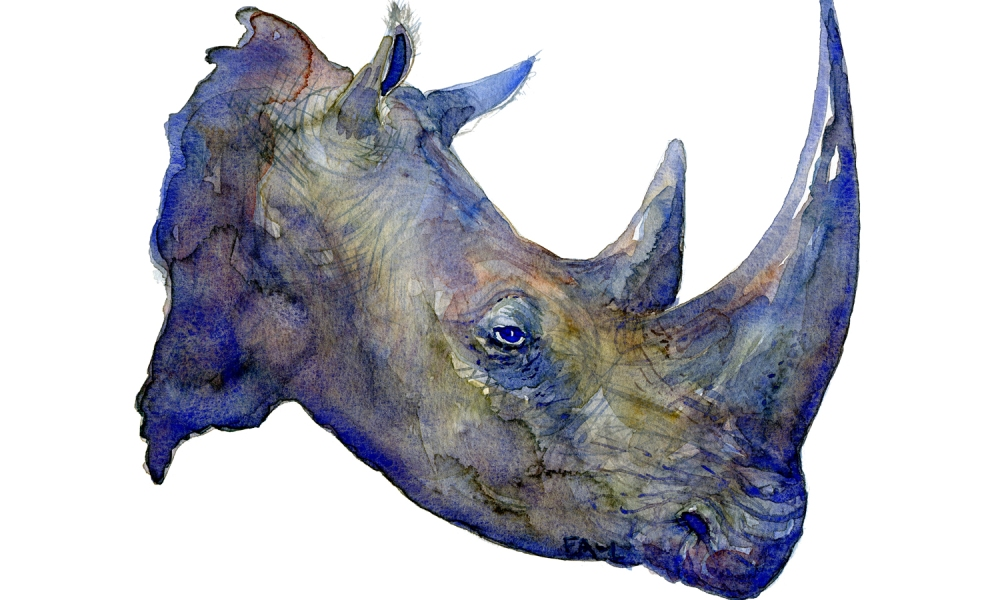 Artwork by Frits Ahlefeldt, watercolor of rhino