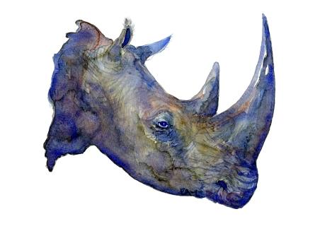 Artwork by Frits Ahlefeldt, watercolor of rhino