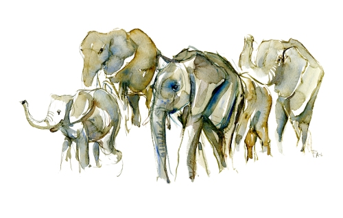 Watercolor of a group of elephants