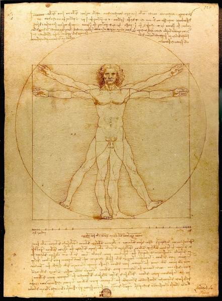 The Virtruvian Man Sketch by Leonardo Da Vinci
