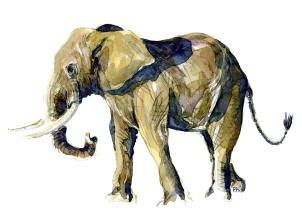 Watercolur of elephant