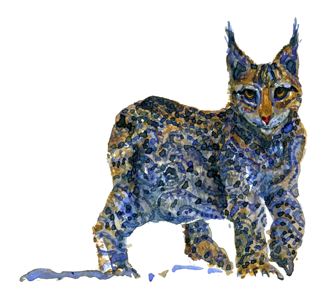 Lynx watercolor illustration by Frits Ahlefeldt