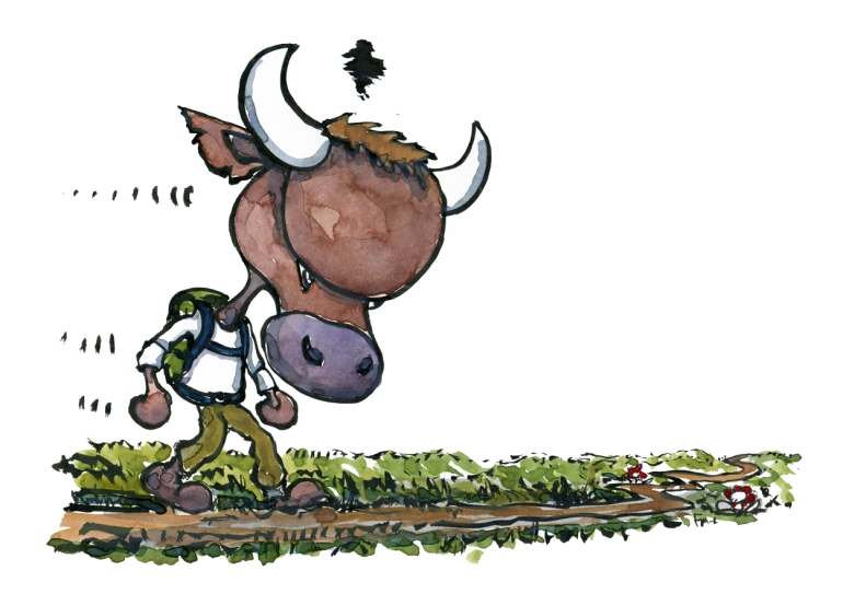 Drawing of a small backpacker bull, angry and walking