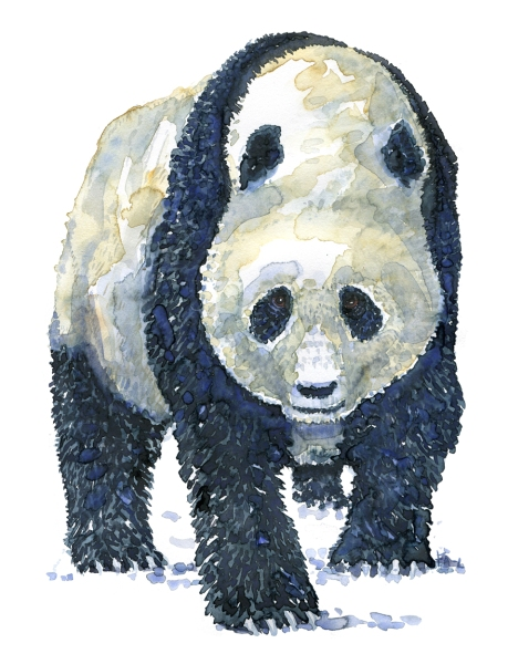 Watercolour of a Panda, by Frits Ahlefeldt