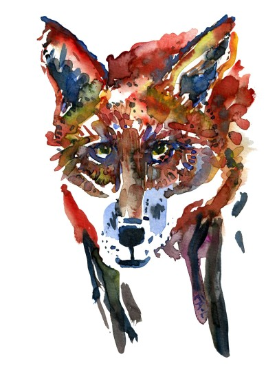 Fox, front look. Watercolor sketch by Frits Ahlefeldt