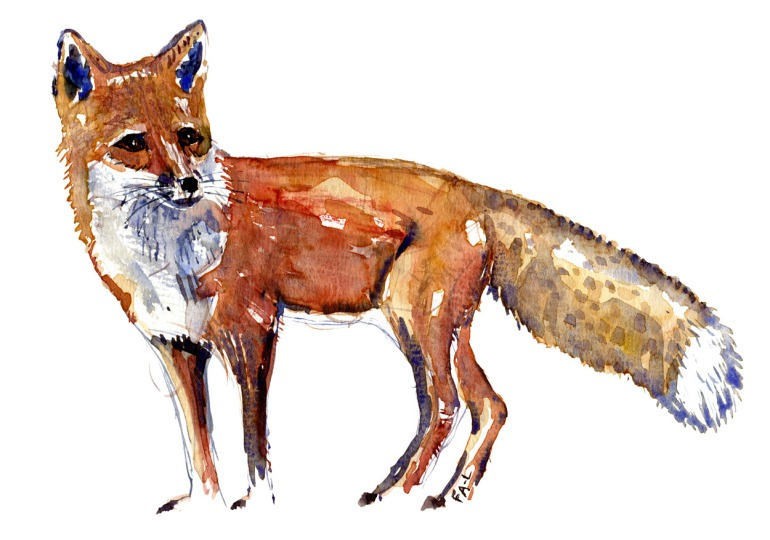 Red fox, sideview, watercolor by Frits Ahlefeldt
