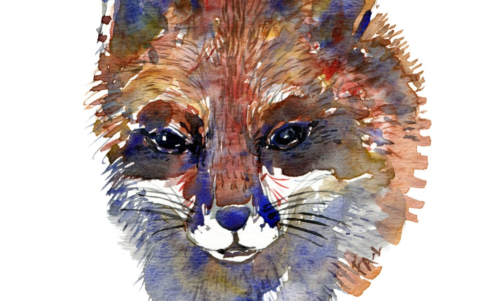 Red fox head in watercolor by Frits Ahlefeldt