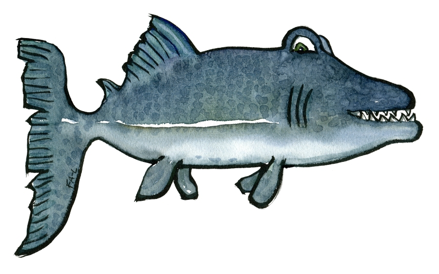 Fierce looking blue fish. Drawing by Frits Ahlefeldt